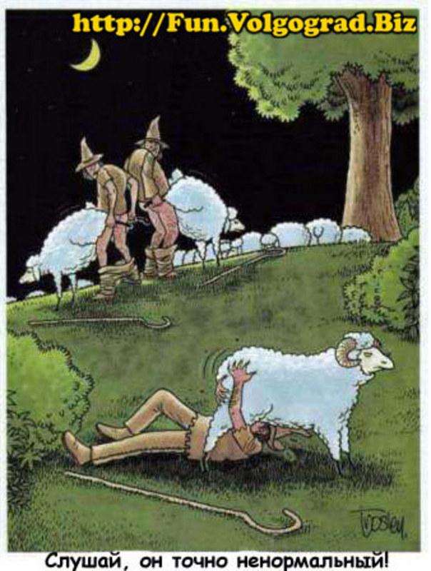 секс с овечкой россказ