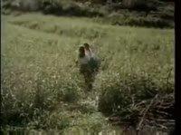 Девушки нашли парня в поле