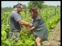 Секс с беременной в винограднике